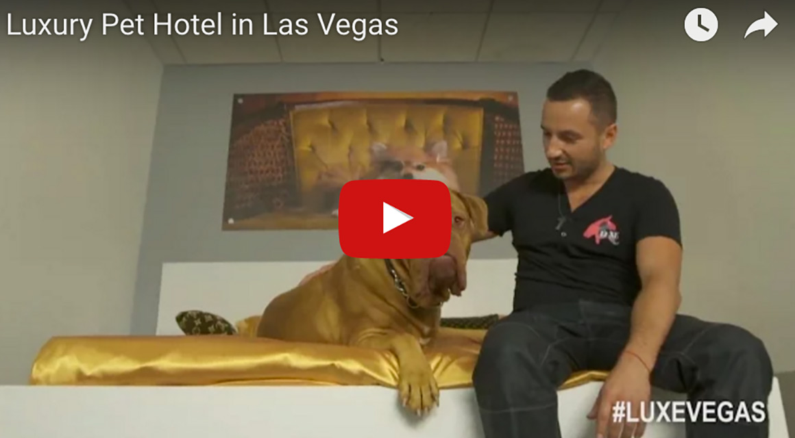 Luxury Pet Hotel in Las Vegas